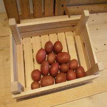 Rosagold pootaardappelen volkstuin moestuin aardappelen online bestellen internet