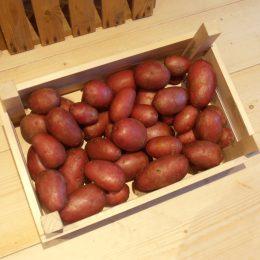 Alouette is een vastkokende, geelvlezige aardappel met mooie rode schil. Vanwege de resistentie tegen Phytophthora in loof en knol, is Alouette uitermate geschikt voor de biologische teelt. Alouette is op eenvoudige wijze te telen voor volkstuinders en particulieren, geeft een hoge opbrengst en u kunt er ook frites van maken.