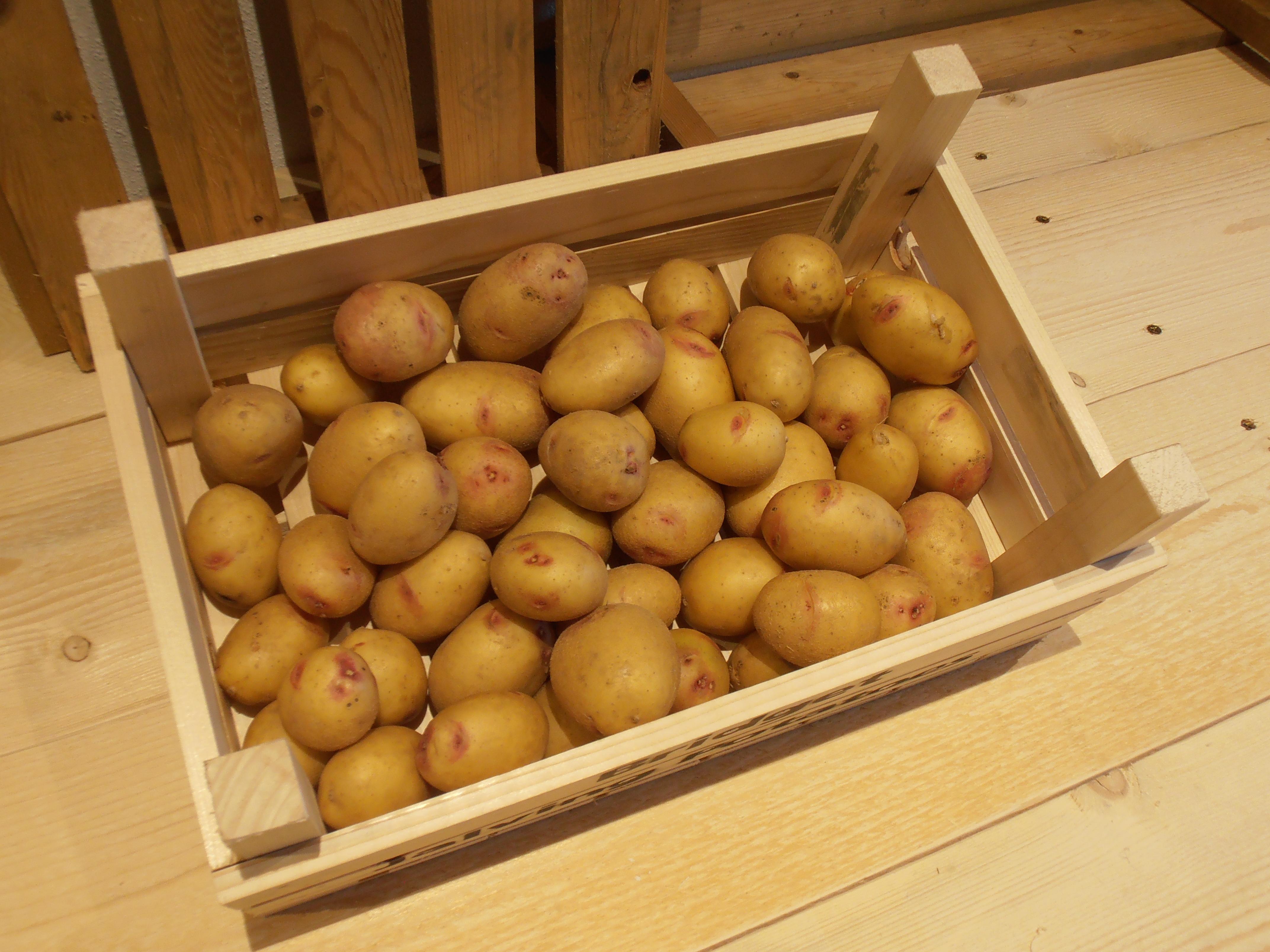 Carolus is aardappel welke geschikt is voor biologische teelt op volkstuin en volkstuinvereniging.